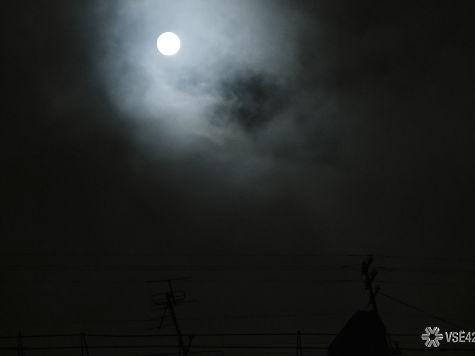 ВБерезовском осудили мужчину, бросившего котёнка впечь