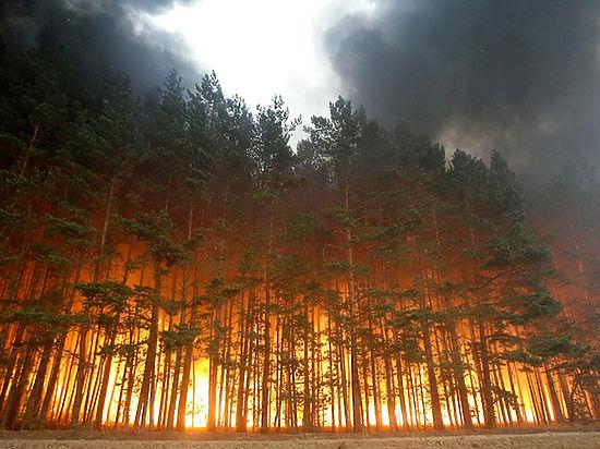 Пожар нестрашен: кузбасские лесные диспетчеры отличились намежрегиональных учениях