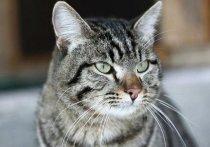 Привитый друг: главный ветеринарный инспектор Кузбасса рассказал о заболеваниях домашних животных