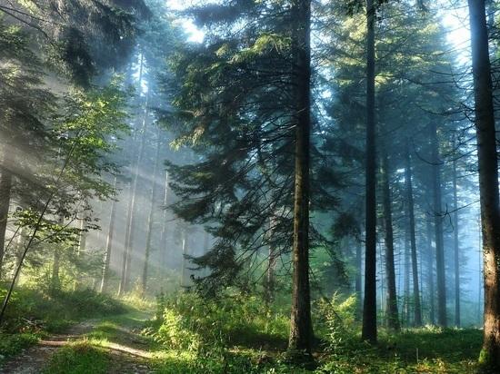 Заподжог травы кузбасским дачникам угрожает штраф до млн. руб.