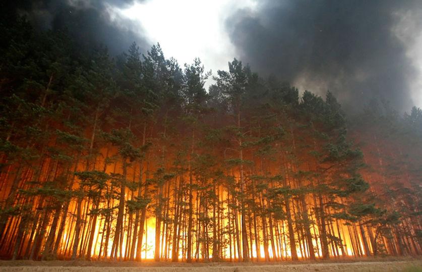 63 жителя Кузбасса заплатят штрафы заподжог травы