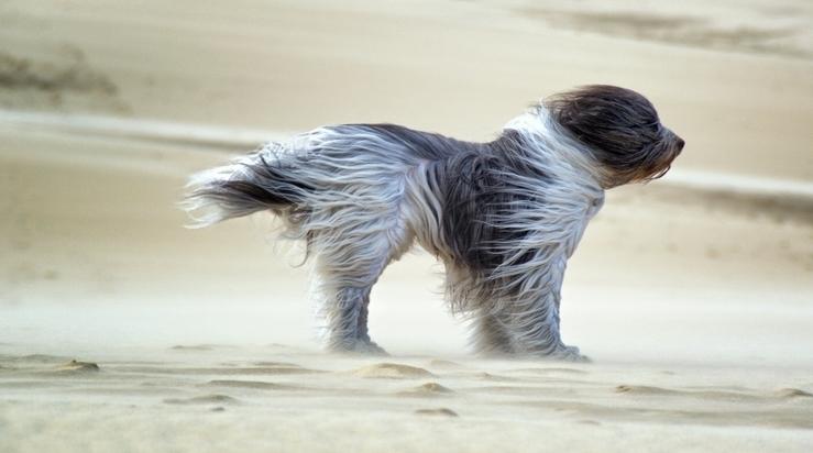 ВКузбасс идут шквалистый ветер, дождь игрозы
