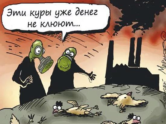 Спасет ли «зеленый щит» кузбасский лес