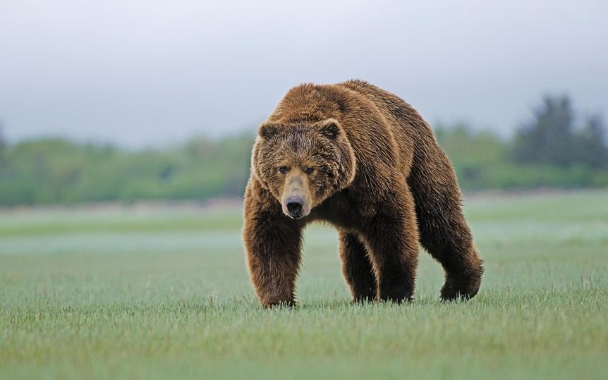 Милиция помогла заблудившемуся вПрокопьевске медвежонку вернуться влес