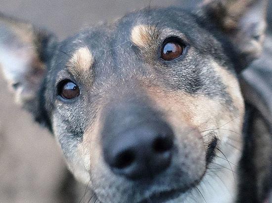 Водитель Nissan расстреливал бездомных собак в Новокузнецке